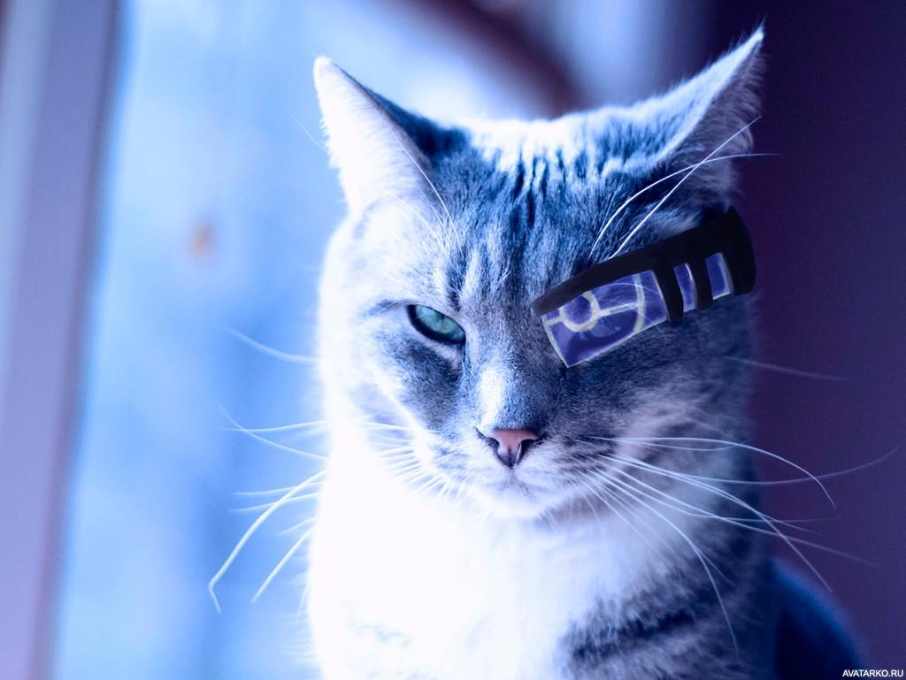 Кот с очками космос фото на аву