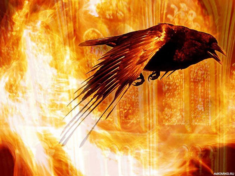представляют картинки ворона в огне ведьмы