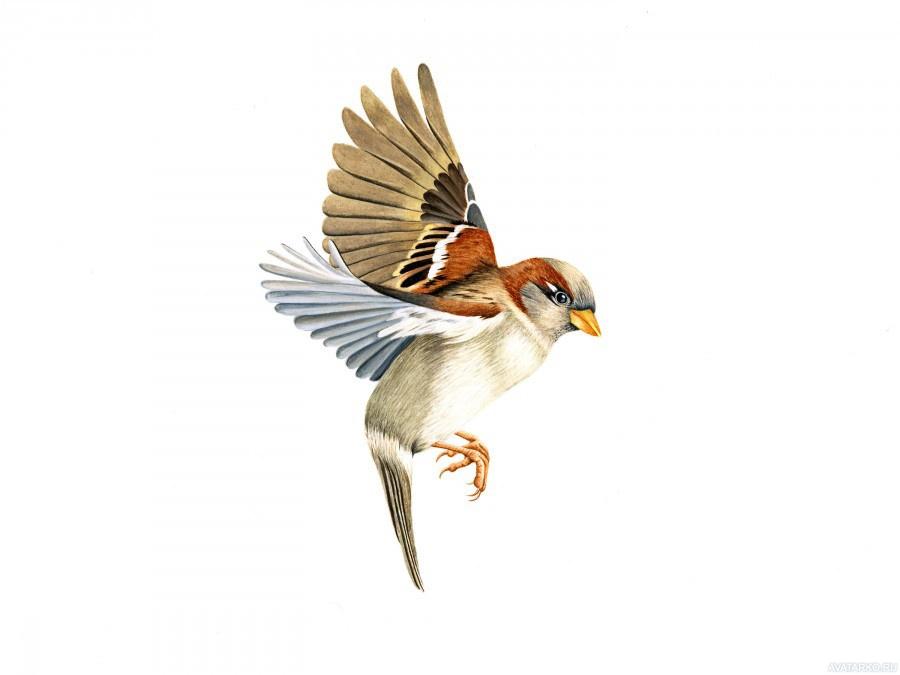 Картинки птица в полете для детей