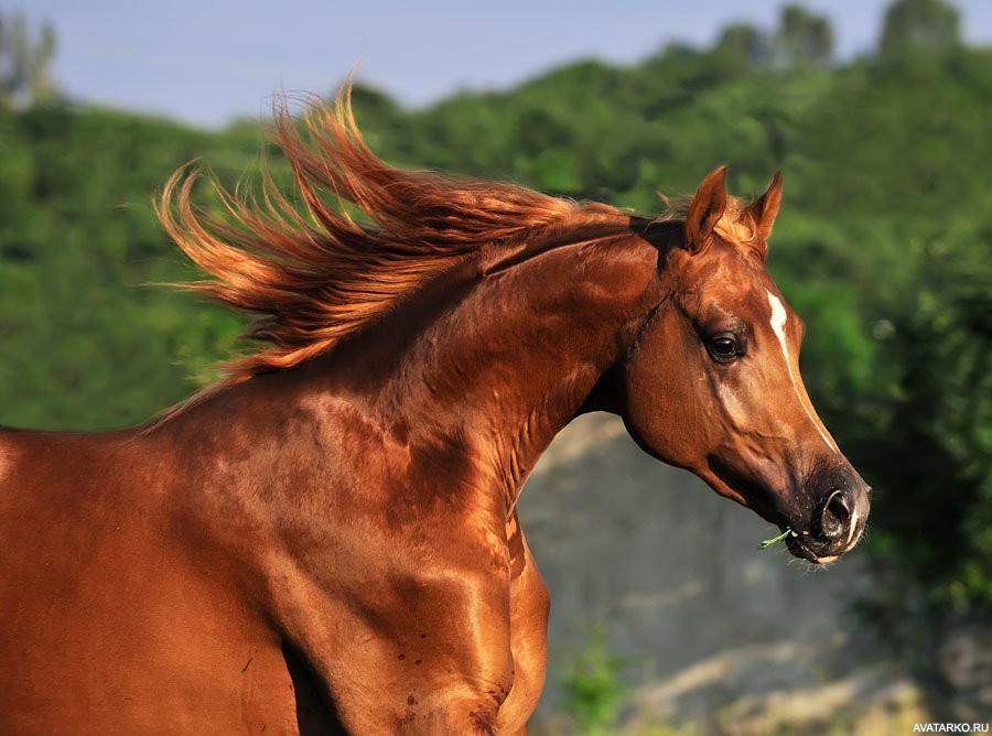 лошади скачать картинку