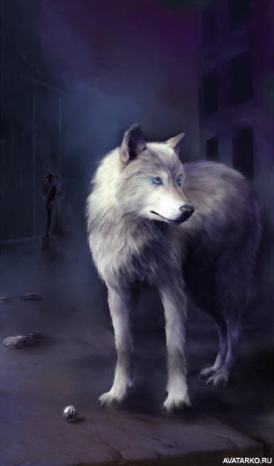 волков на аву вконтакте