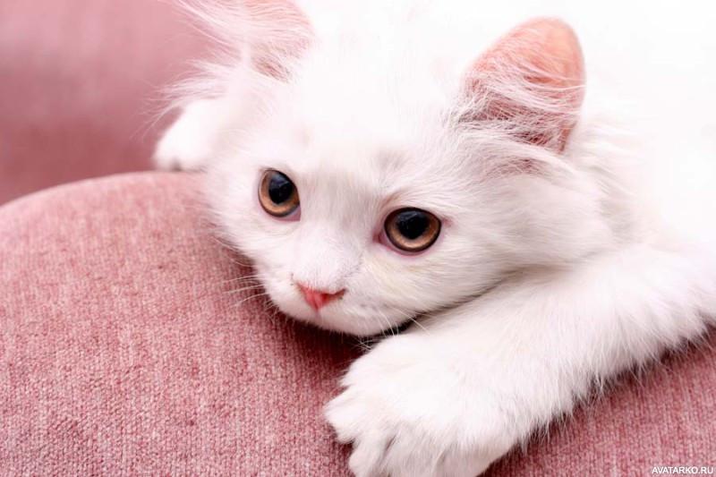 Картинка скучаю с кошкой