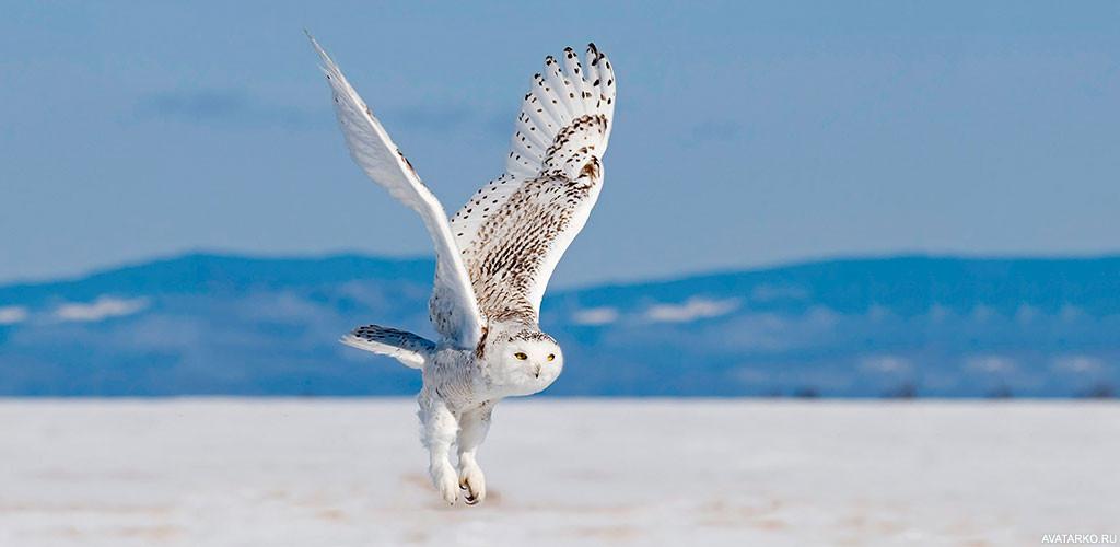 клубе животные птицы тундры фотографии сюда