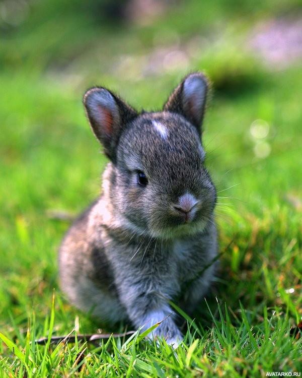 Картинки зайчатами