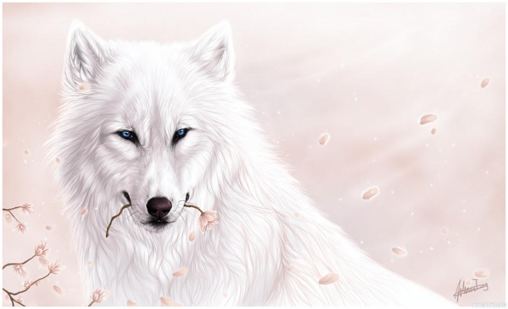 Белый волк картинки арт