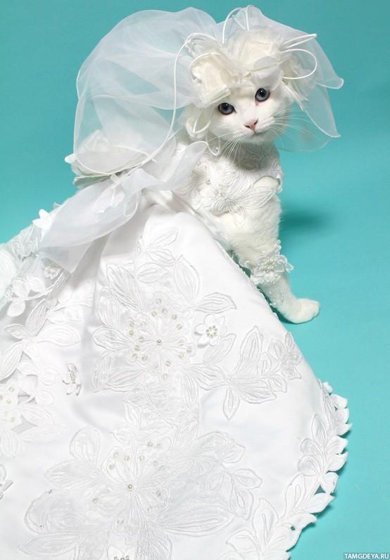 Свадебные платья на кошках