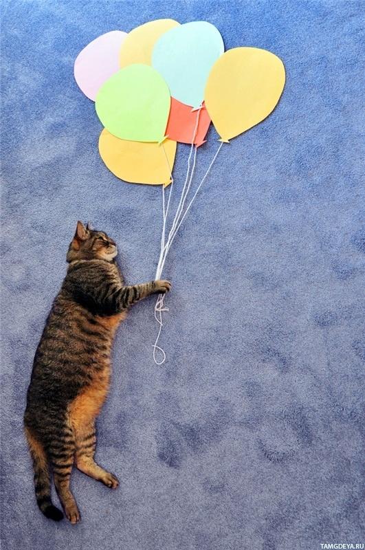 Картинки с шариками прикольные и котами