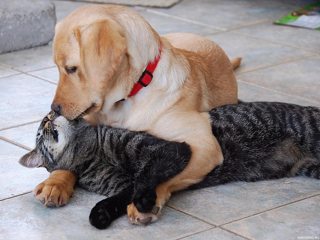 Собака с котом лежат в обнимку — Фото аватарки