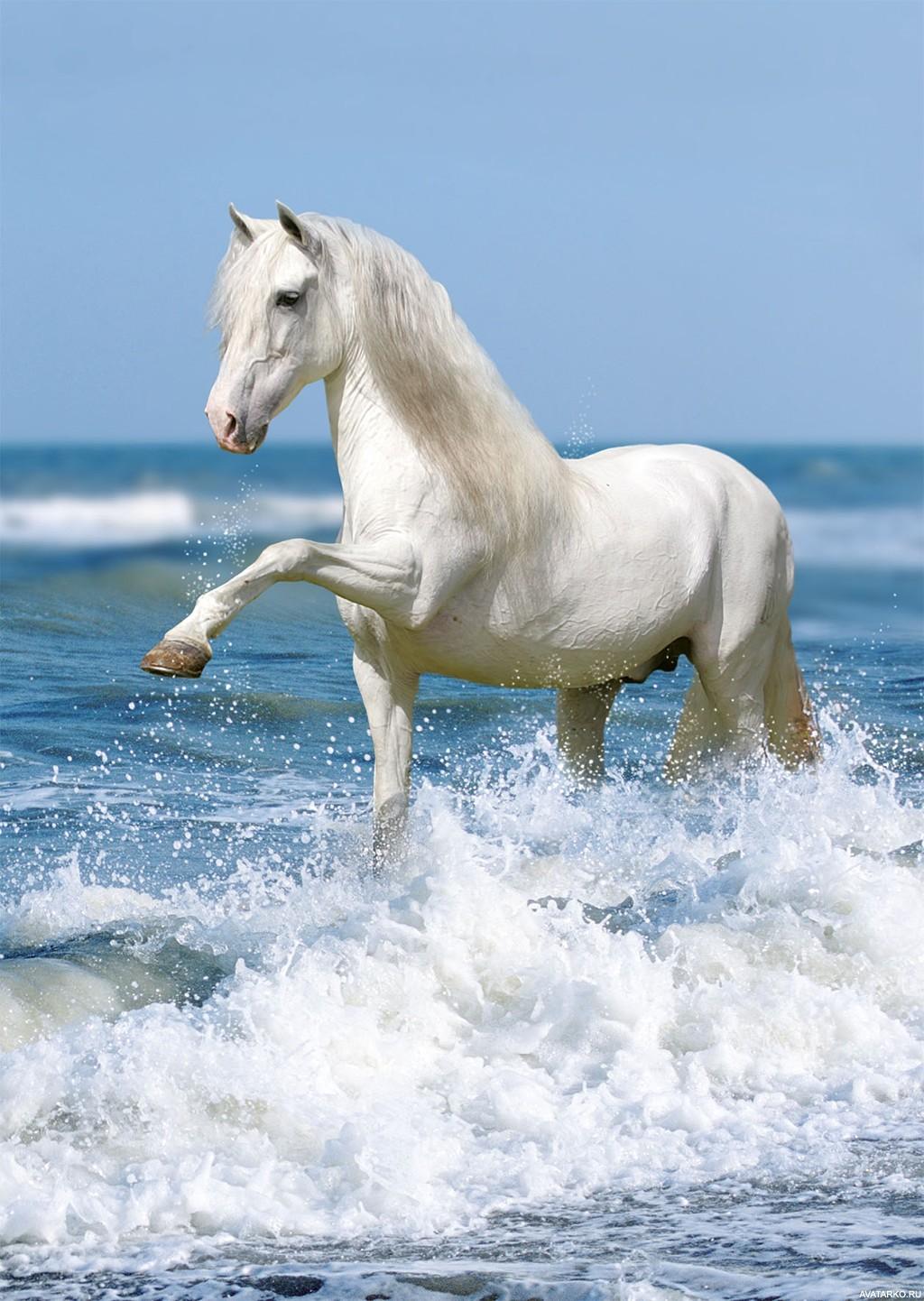 Картинки лошадей белых красивых