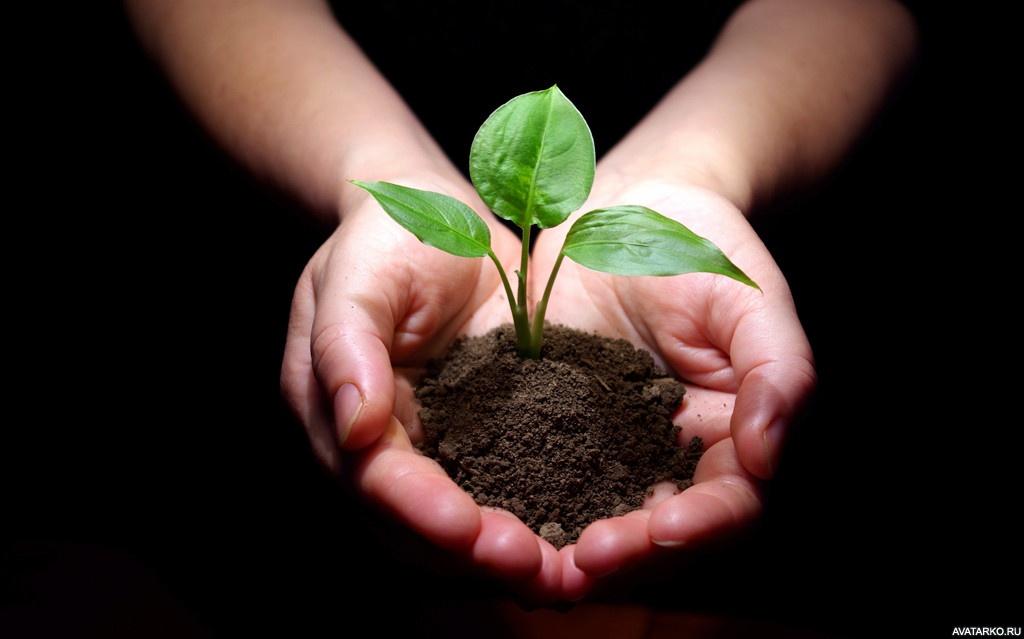 Картинки растения это жизнь