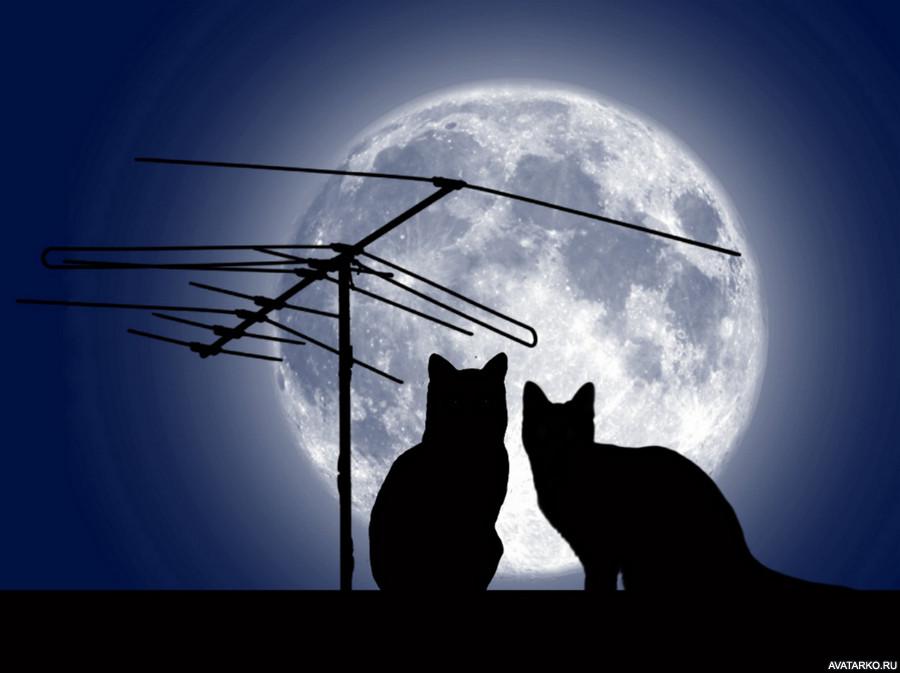 установкой кошки под луной картинки шее