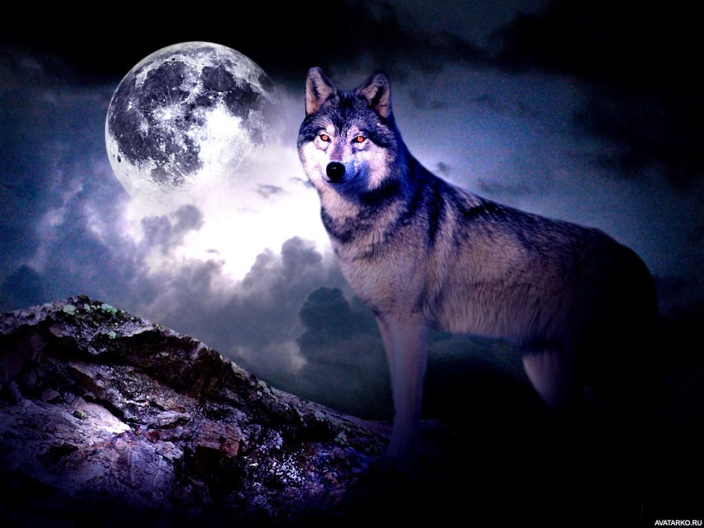 фото волка на фоне луны без фанатов