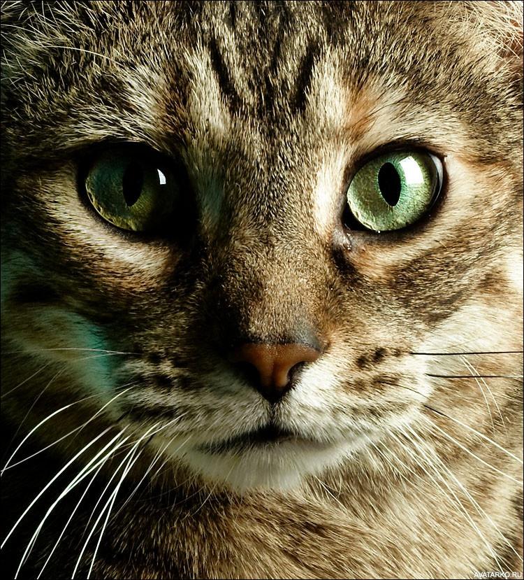 картинка про кота с глазами