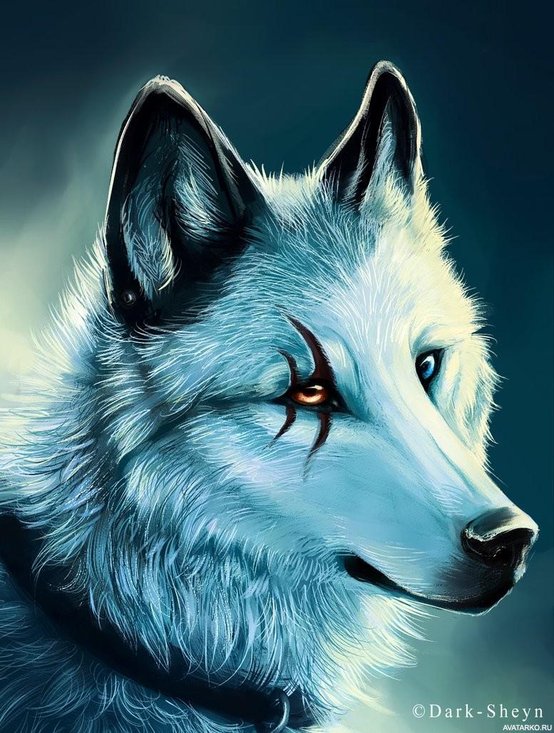 Темы волк