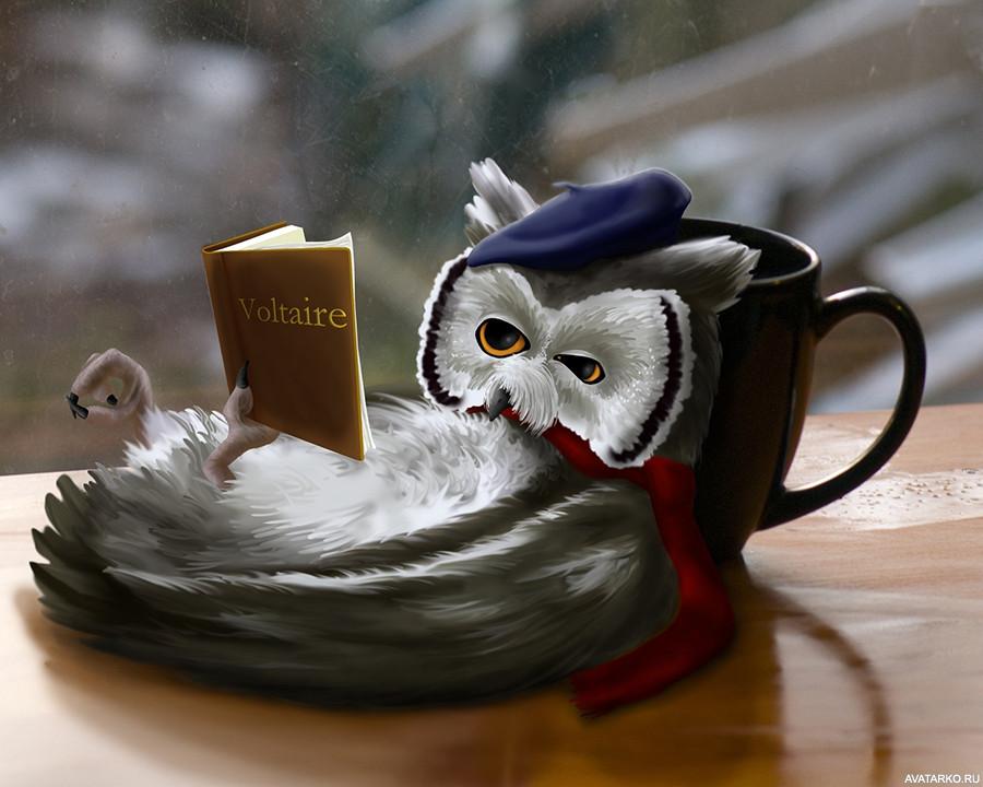 Смешная картинка с добрым утром сова, картинки карандашом