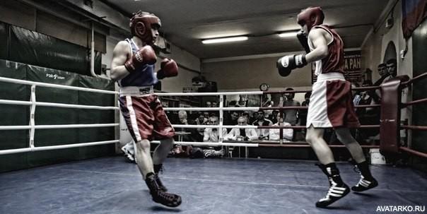 фото боксеров на аватарку
