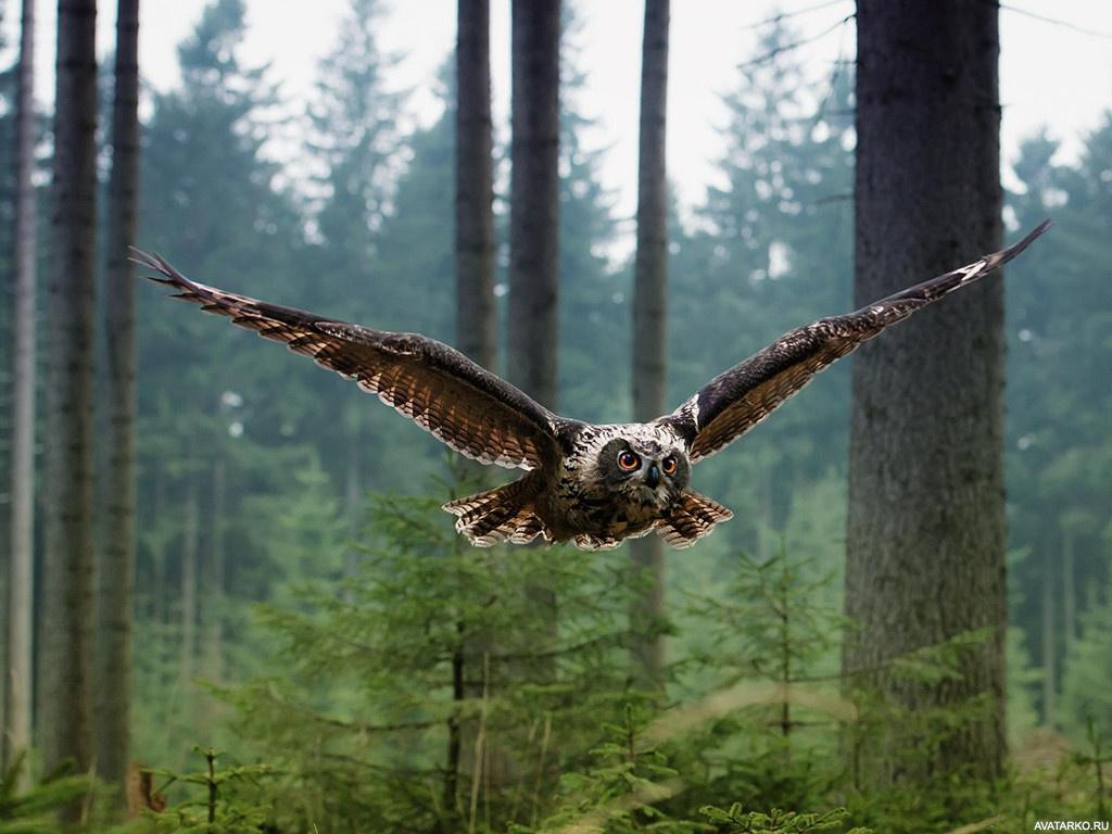 Летящая в лесу сова с большими расправленными крыльями ...