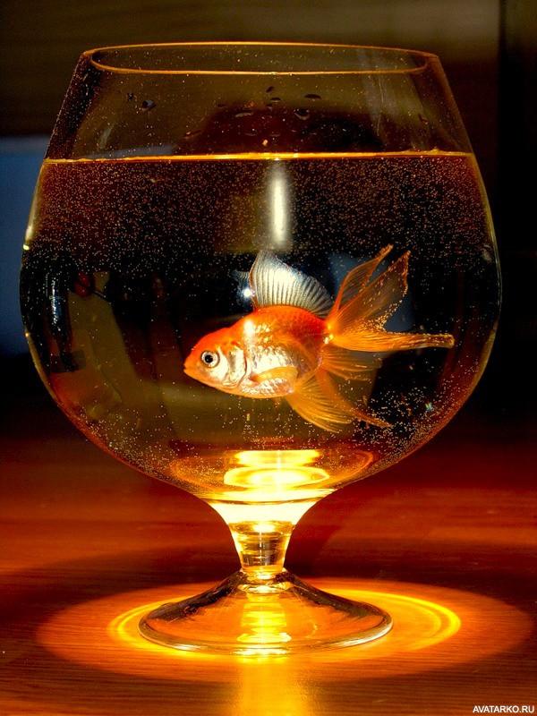 Открытки с днем рождения анимация с рыбками, открытка революции