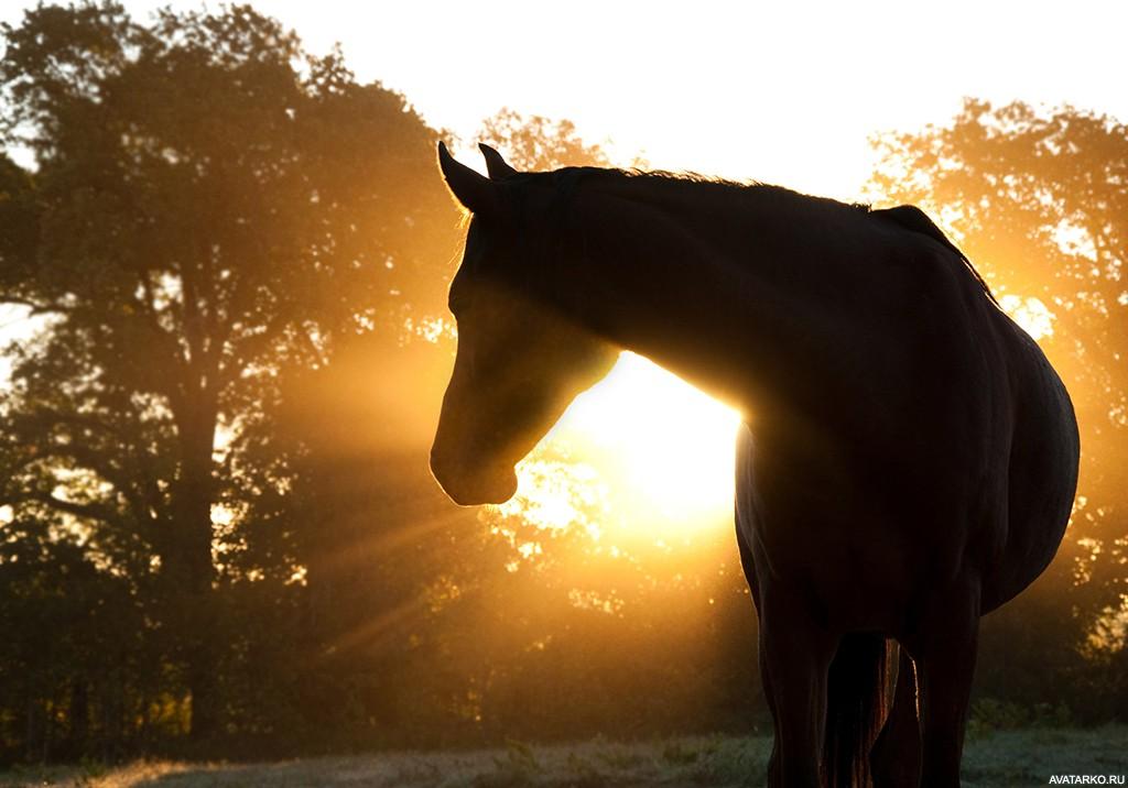 Картинка коня доброго
