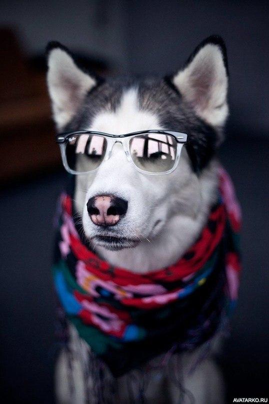 собаки картинки на аву