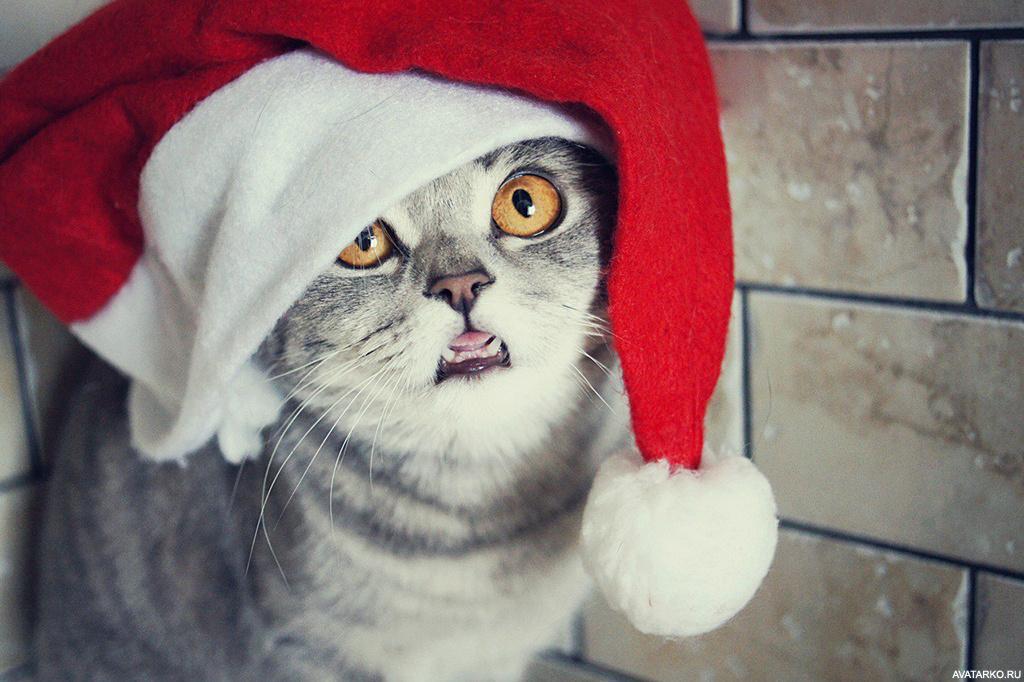 Скачать картинки на телефон с котами 7