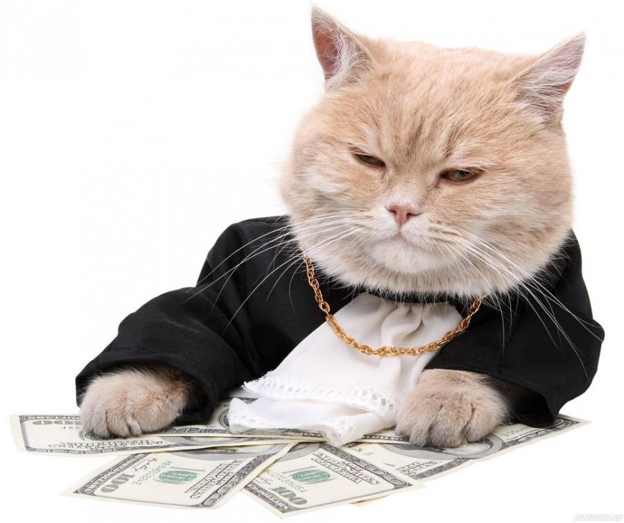 Фото на аву про котов