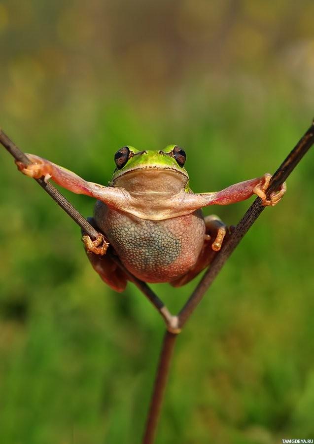 Смешная картинка жабы