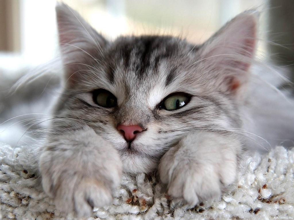 красивые фото с кошками на аву крите развит прокат