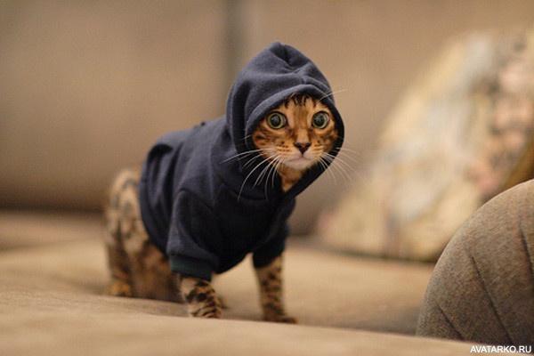скачать картинки с котами