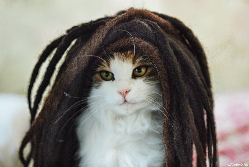 Кот дреды