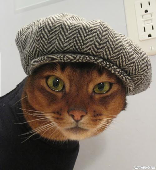 ᐈ кот: фотки и картинки кот, скачать фото на depositphotos®.