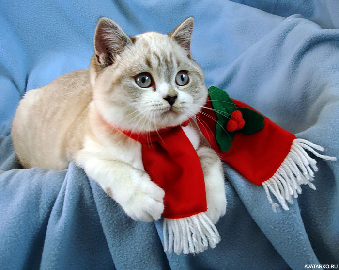 выполнения котенок в шарфе картинки тех же