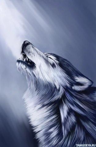 Волчица аватарка