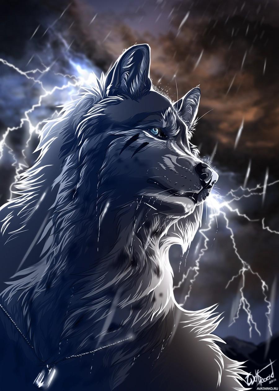 Картинки и авы волков