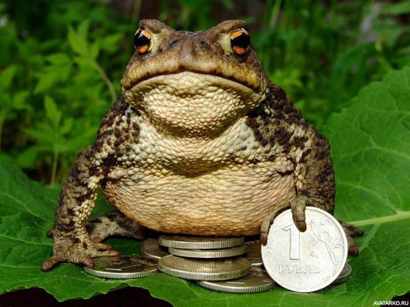 уверена, картинки жаба давит представляют собой