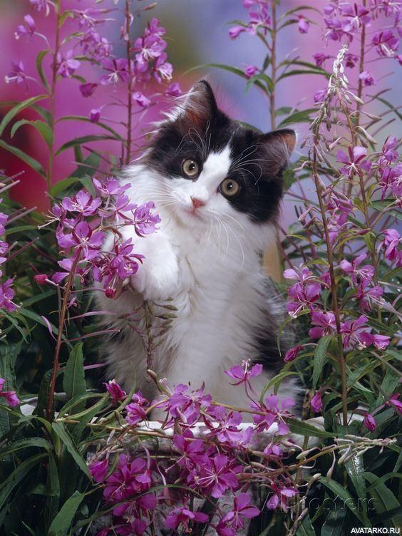 кошка цветы красиво фотография