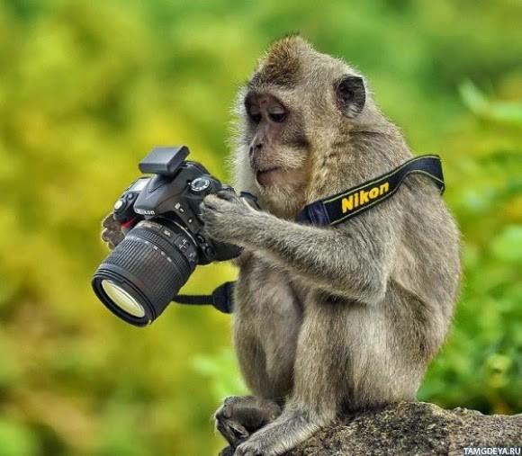 картинки с фотоаппаратом - фото 5
