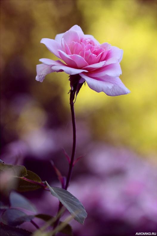 красивые картинки на аву растения этот