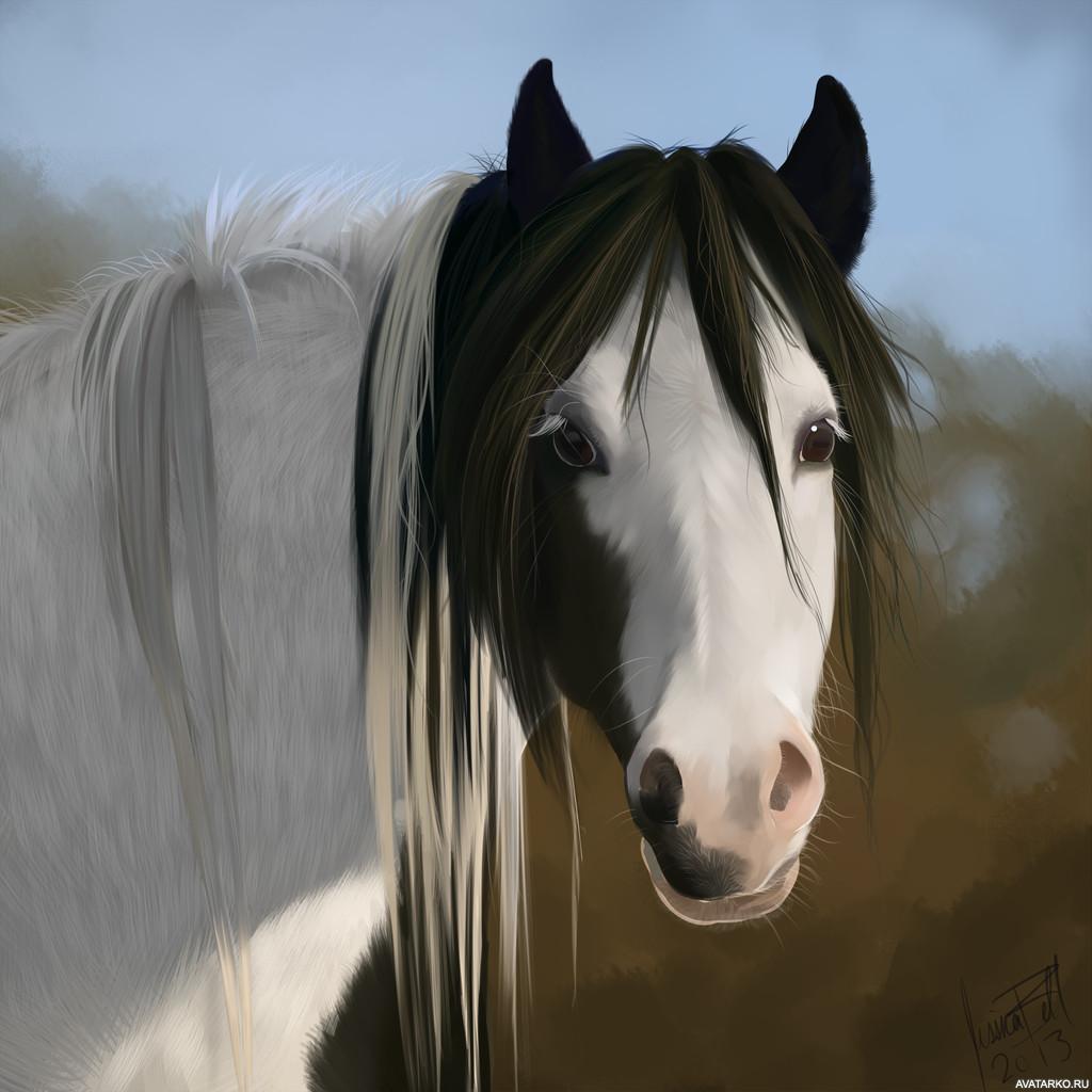 картинки с лошадью на аву мотивы явно
