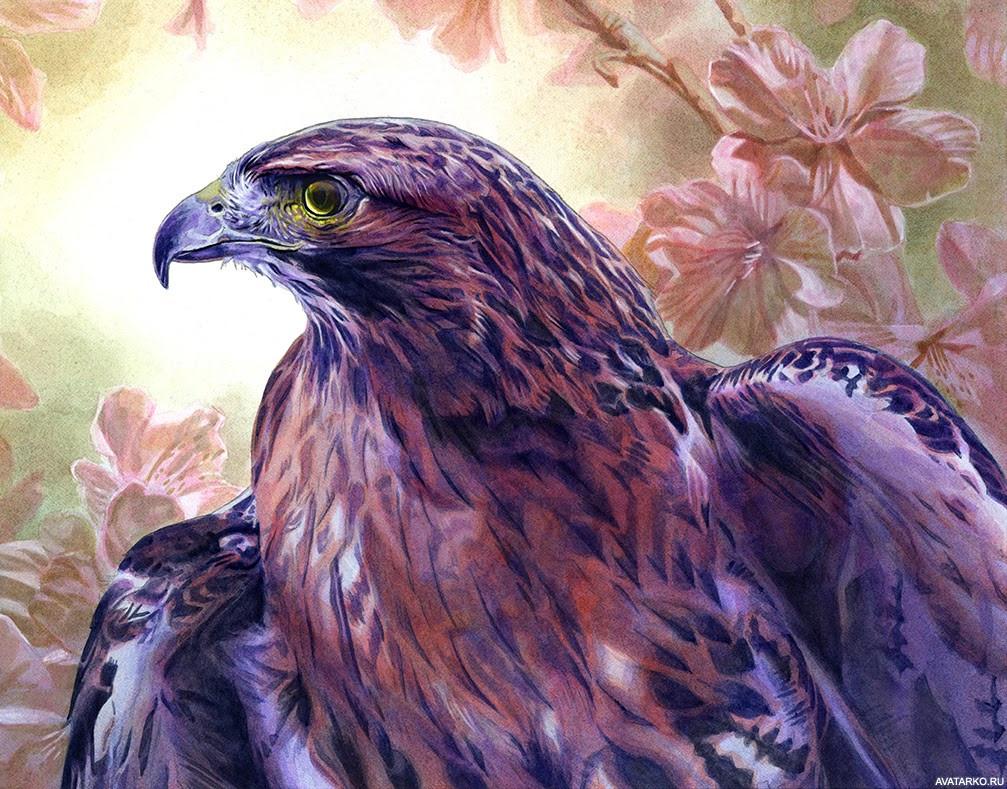 Птицы картинки на аватарку