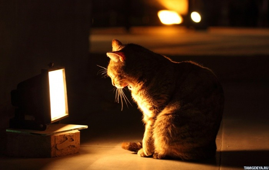ламповые картинки атмосфера котики никогда делала