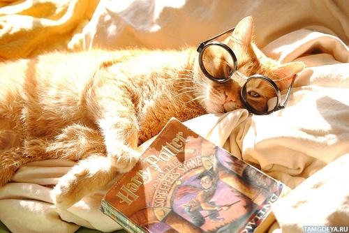 Скачать картинки на телефон с котами 6
