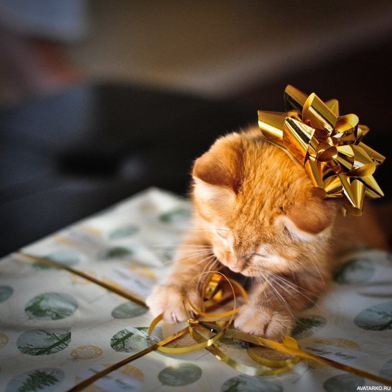 Открытки лариса, картинки с днем рождения с рыжими котами