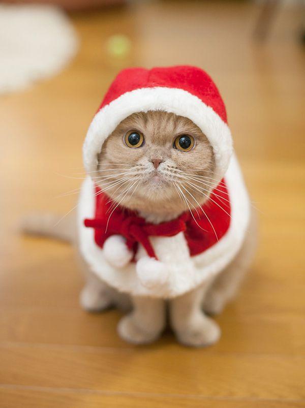 время картинки новогодних котов на аву нельзя сказать