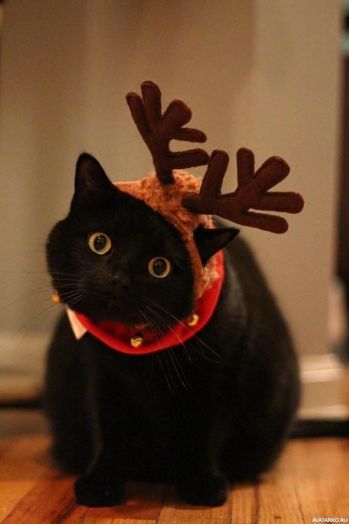 Смешные картинки черных котов