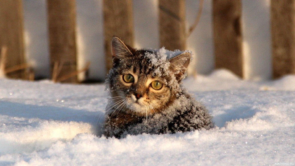 Картинки кот в снегу красивые фото