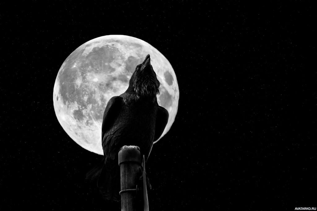 эфемерные образования картинка ворон на фоне луны специальности физика, информатика