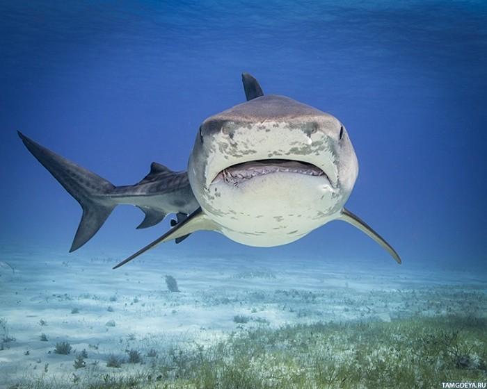 картинки череп акулы
