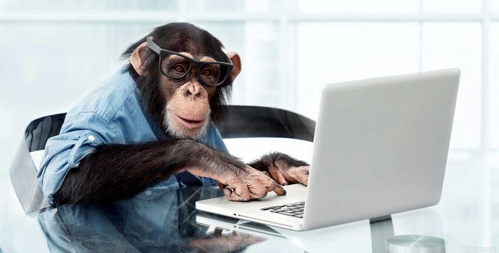 картинки компьютер и животные вторую