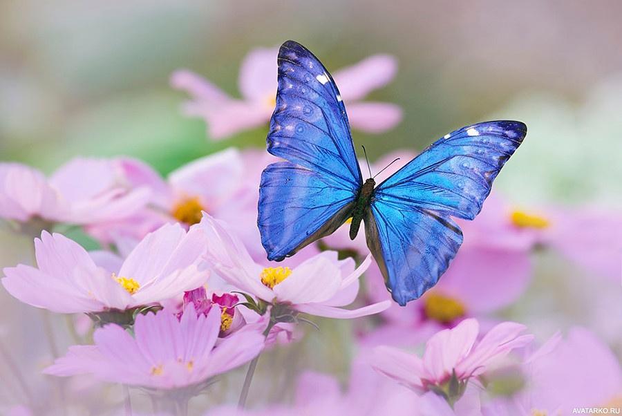 Картинки, открытки с бабочками хорошего дня